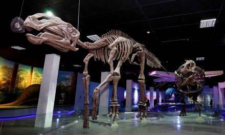 Museo de la Evolución